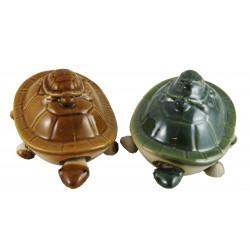 Long Life Turtle